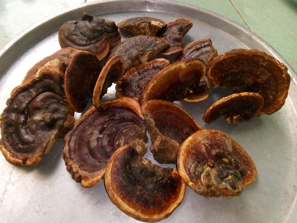 Nấm linh chi  khô loại 3